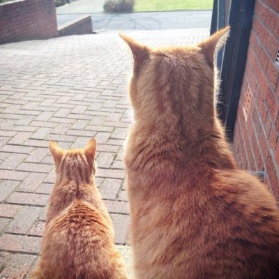 Seeing double …. Garfield and George enjoying the spring sunshine