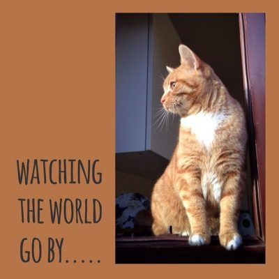 Garfield … sitting pretty and watching the world go by ….
