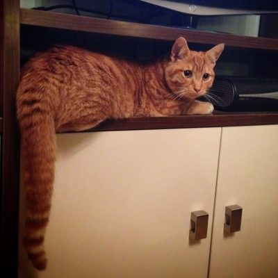 Garfield discovers a new vantage point!