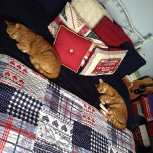 ginger cats snooze blog recap 2014 on janmary.com