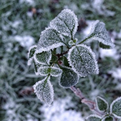 On a cold and frosty morning …….