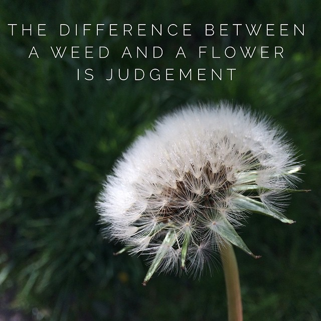 The Difference Between A Weed And A Flower Is Judgement