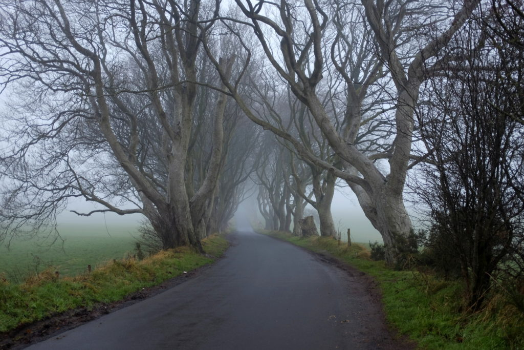 dark hedges janmary,com