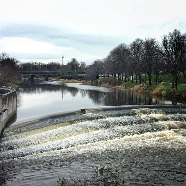 River Lagan, Lisburn