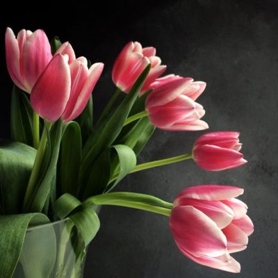 Tulips on a Monday