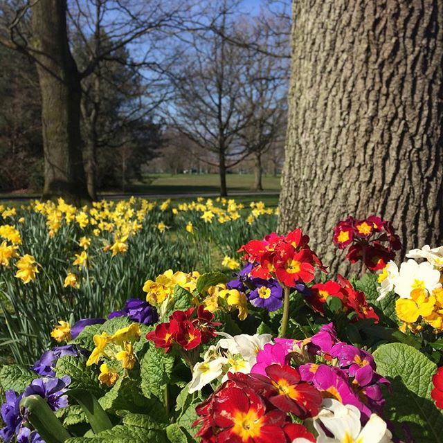 Lots of spring colour at Malone House