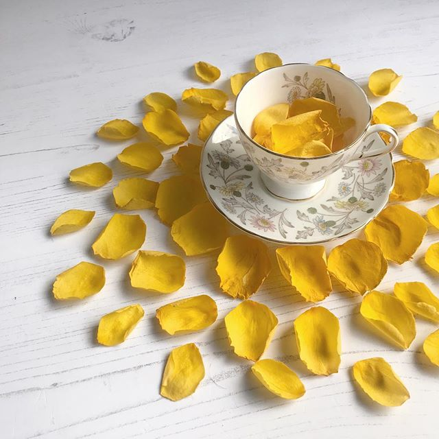 Faded yellow rose petals and vintage china