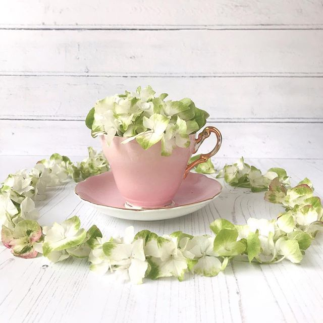 Pretty petals in a pink teacup